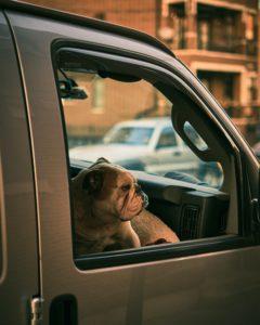 ¿Tengo que llevar al perro a urgencias?