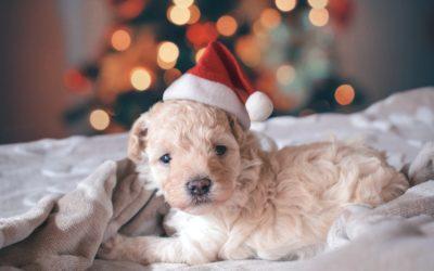Algunas ideas de regalos de navidad para perros
