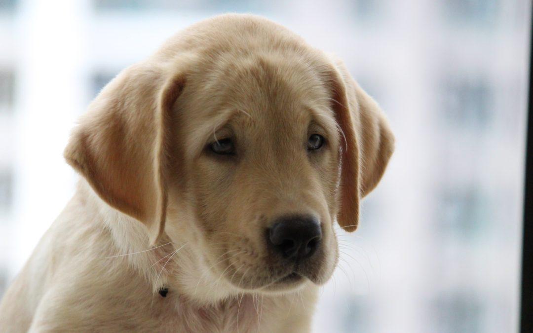 El estrés en los perros