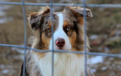 La diferencia entre perreras municipales y protectoras