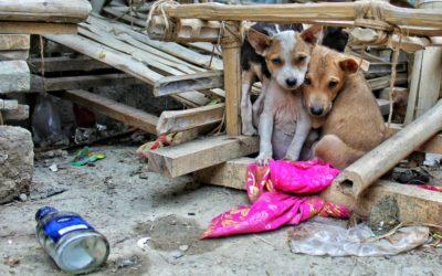 El silencioso problema del abandono de perros