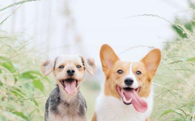 Consejos y sugerencias para nombres de perros