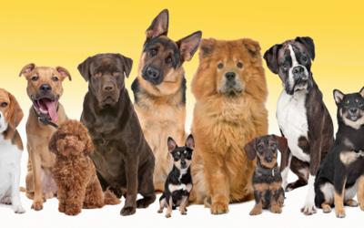¿Perros mestizos o de raza?