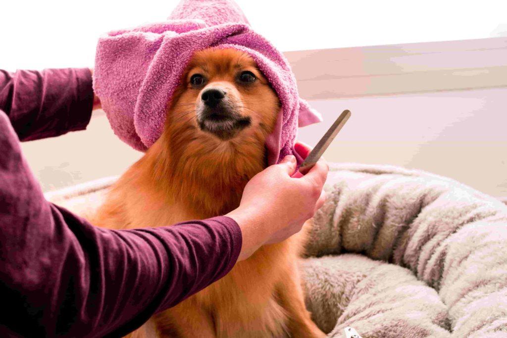 cuidados necesarios para perros