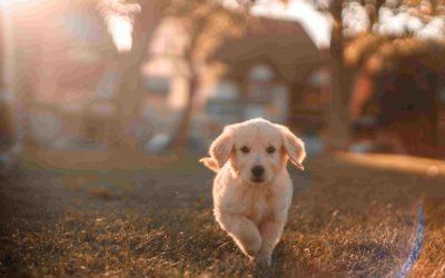 ¿Cómo encontrar el perro ideal?