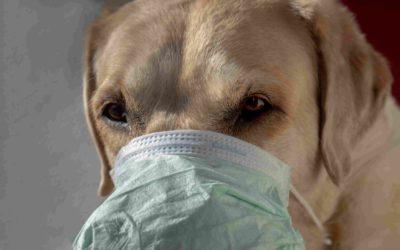 8 enfermedades que pueden transmitir los perros
